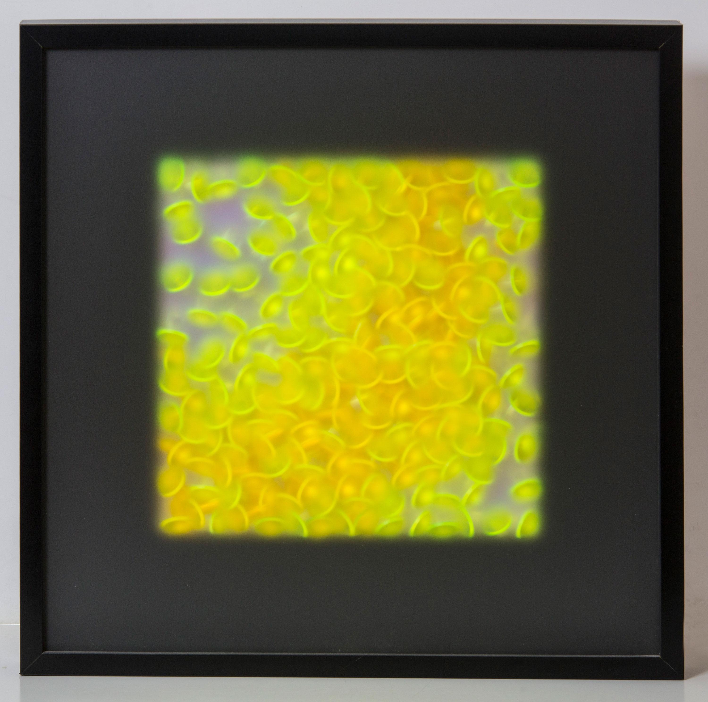 Tamar Klar Objekte, Transformation auf Schwarz, 2013